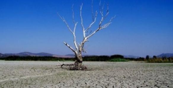 Düşünce ve Uygulama Boyutuyla Çevre Korumacılık-Radikal Ekoloji Ayrımı